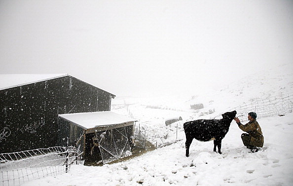 Snow Continues To Descend On New Zealand