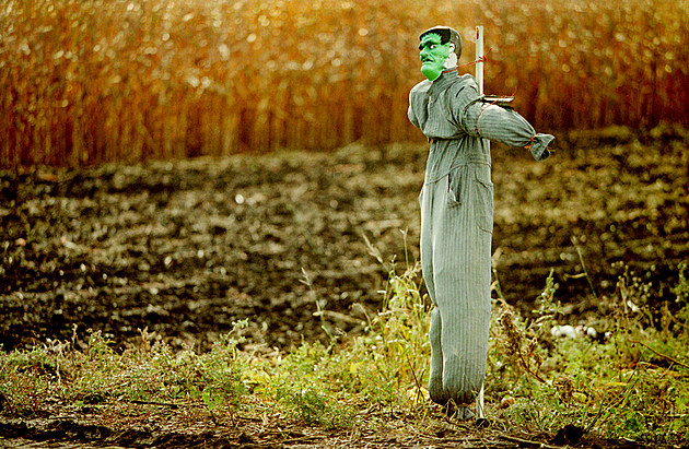 Scarecrows Work the Farmers'' Fields